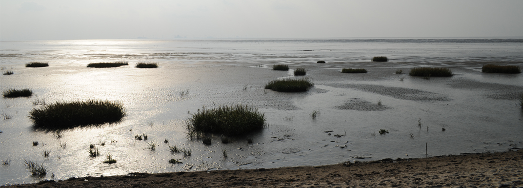 Nationalpark Wattenmeer